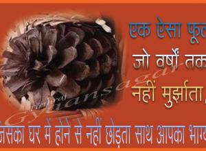 fool nahi murjhhata hai-2